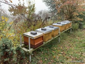 Ruhe am Bienenstand